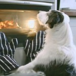 personal brand e il cane di Thinkbox TV Ad