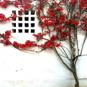 Casa a Peschici [retro] © Alessandra Colucci