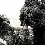 #nevearoma Palazzo Venezia tra gli alberi - ©AlessandraColucci