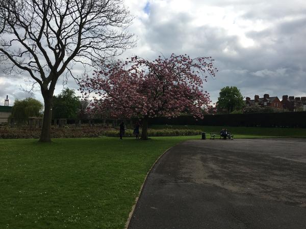 Belfast - Botanic Garden