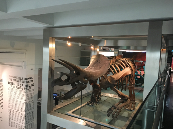 Belfast - Ulster Museum - Triceratopo