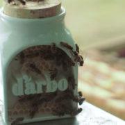 d'arbo - packaging