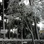 #nevearoma Villa Borghese 2 - ©AlessandraColucci