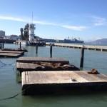 San Francisco - Fishermans Wharf - foche © Alessandra Colucci
